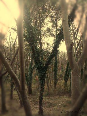 BeFunky_tree